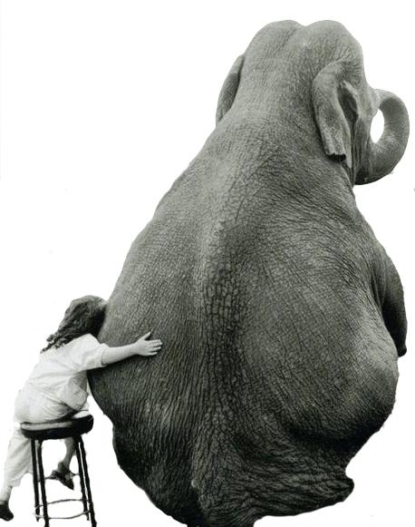 elephant for mailer